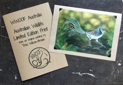 Lyrebird print