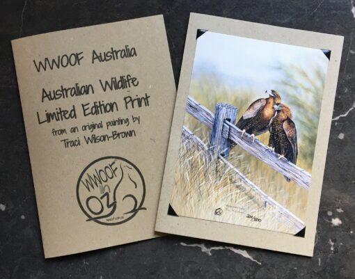 Wedgetail Eagle Print