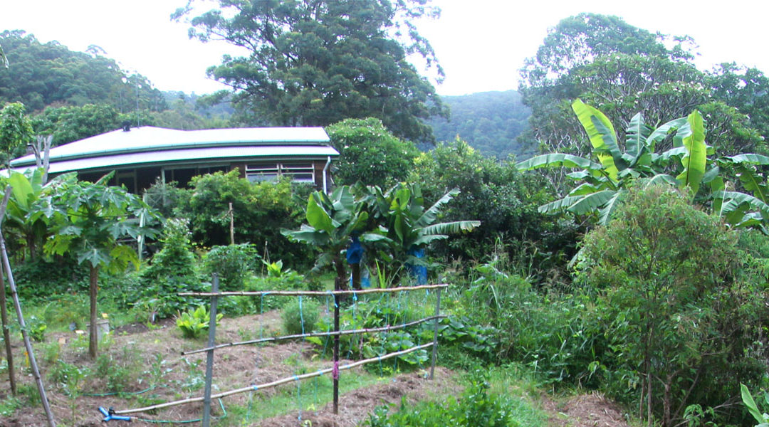 WWOOF at Noosa Forest Retreat