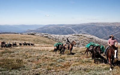 Victoria's High Country – A must for all WWOOFer's!
