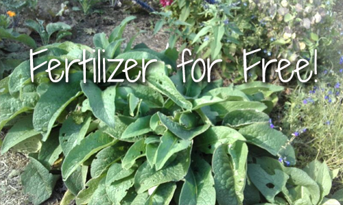 Fertilizer for Free