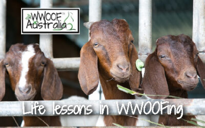 Life lessons in WWOOFing