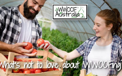 What's not to love about Volunteering with WWOOF?
