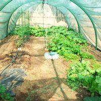 Summer vegetable tunnel