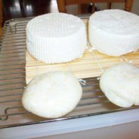 Mozzarella and Camembert in the making
