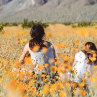 desert_flower_bloom_california