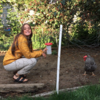 feeding_chickens