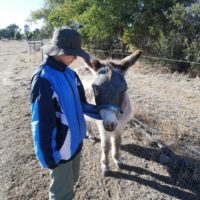 looking after Donkey