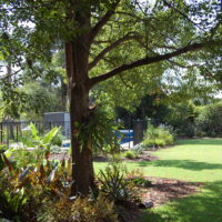 view from rainforest garden