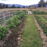 More Row Crops