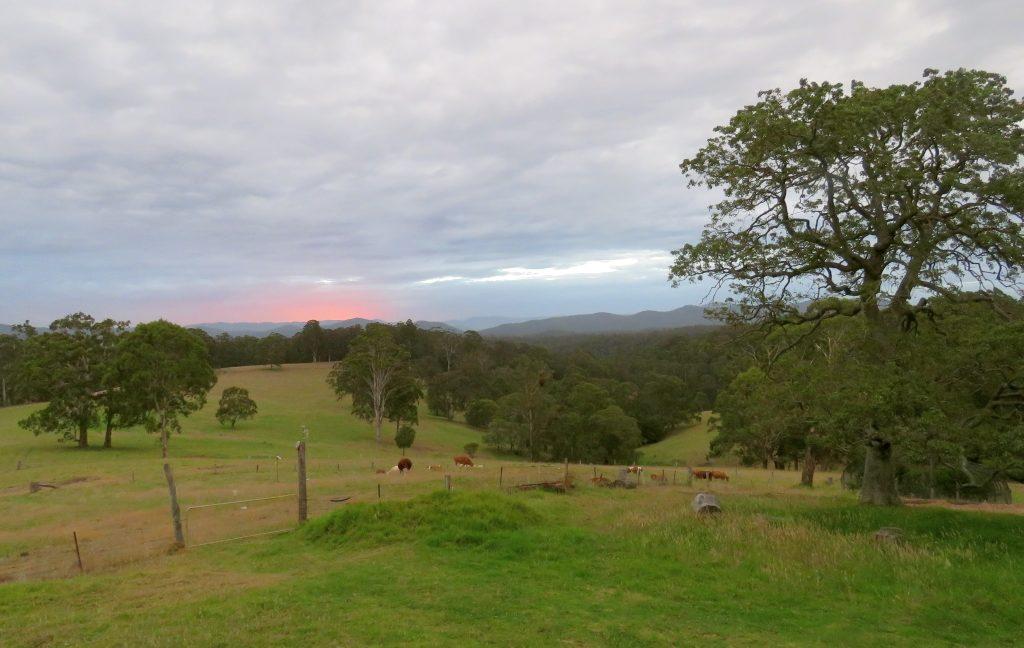 Farm & cows 1