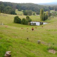 Farm & cows