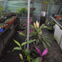 In Jan's greenhouse