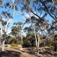 Wombat Creek (2)