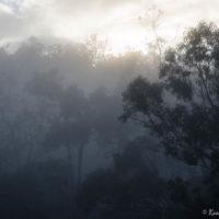 Kookaburra Winter 16-2941