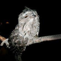 Owl 23