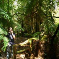 Ruriadh in rainforest 1280