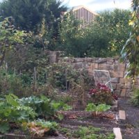 The Vegetable patch approaching autumn