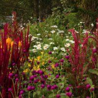 Cottage Garden (5)